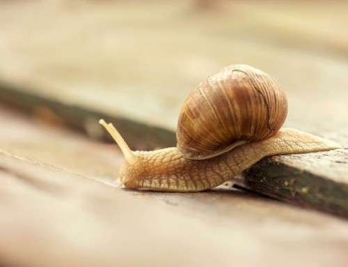 3 Ways to Speed Up a Slow WordPress Website